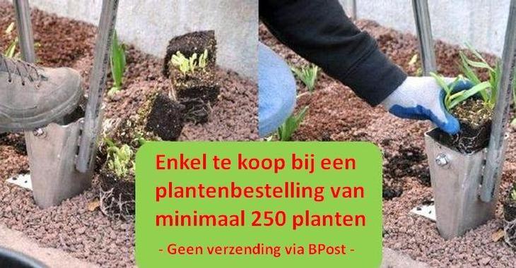.Prairieplanter -PAR-aankoop