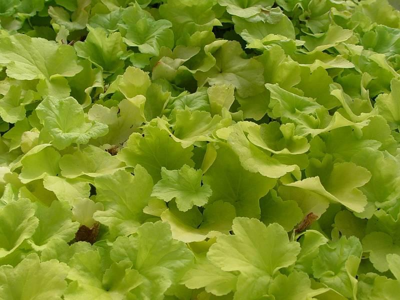 Beeldig blad op - Moderne tuinier ...