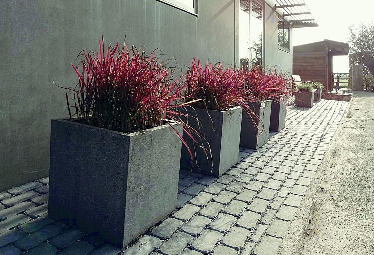 Vaste Planten In Pot Buiten Winterhard.Tip Van De Maand Jouw Vaste Planten Winterklaar Op